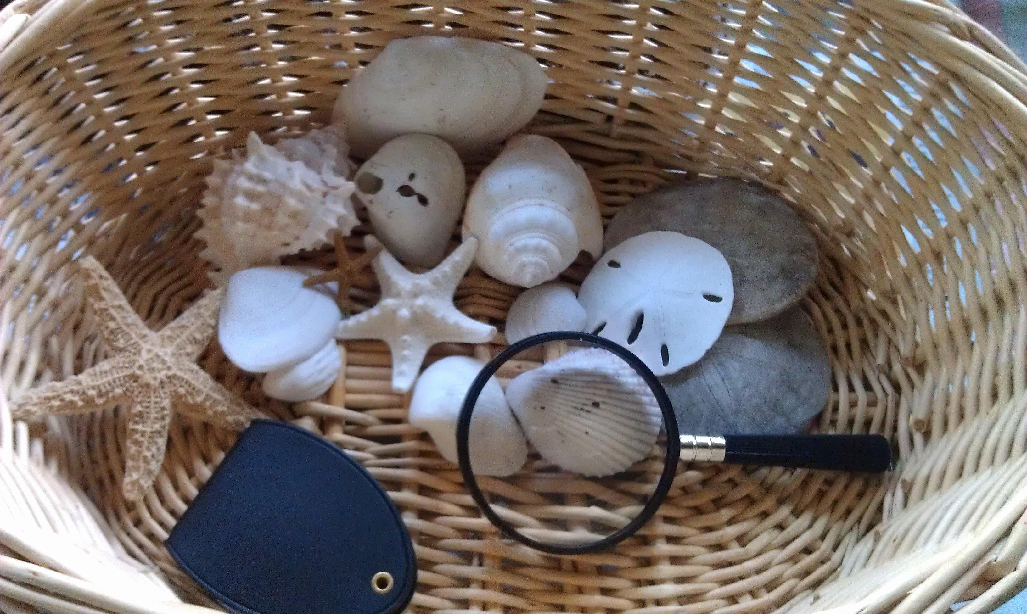 5 E's Lesson Plan Template Elegant Preschool Science Lesson Nature Observation Baskets Woo
