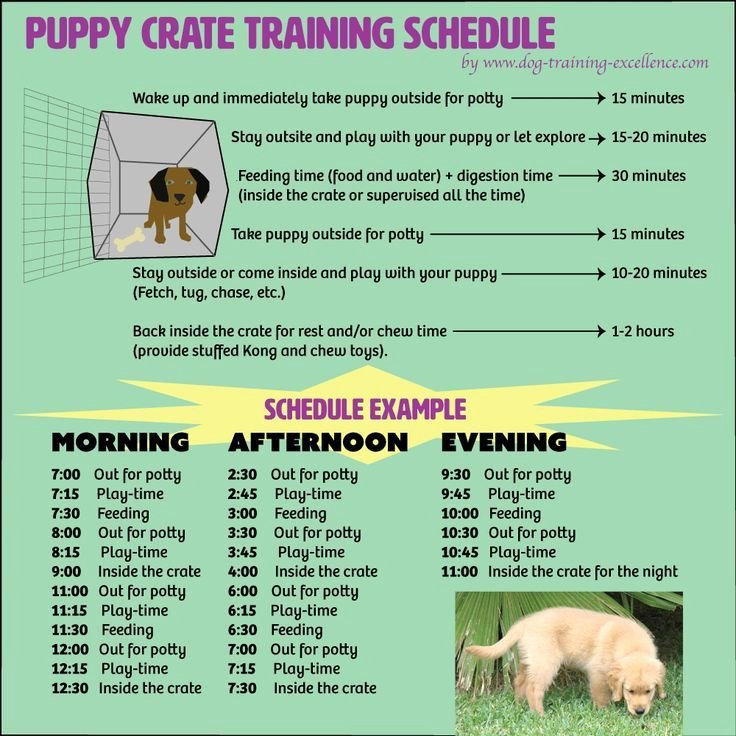 Dog Training Plan Template Fresh Free Printable Puppy Crate Training Schedule the Best