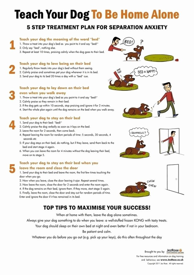 Dog Training Plan Template Lovely 25 Best Ideas About Dog Training Tips On Pinterest