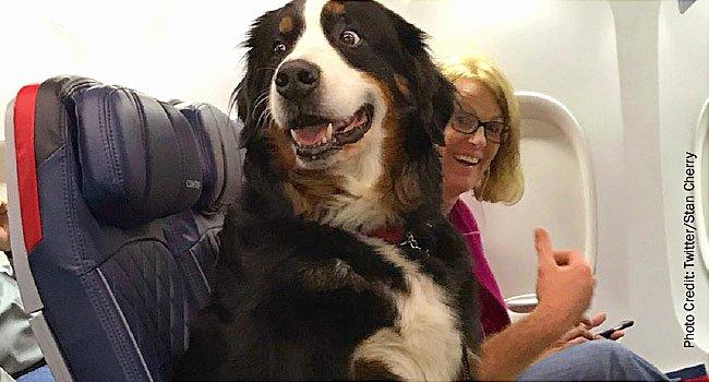 Emotional Support Animal Letter for Flying Example Fresh Flying with Emotional Support Dog Questions Esa Doctors