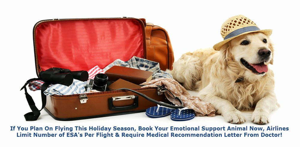 Emotional Support Animal Letter for Flying Example Luxury Emotional Support Animal