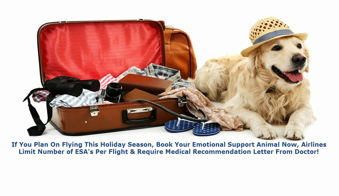 Emotional Support Animal Sample Letter for Flying New Emotional Animal Support Letter