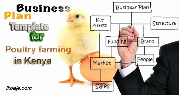 Farm Business Plan Template Fresh Poultry Farming Business Plan In Kenya – Blogopoly