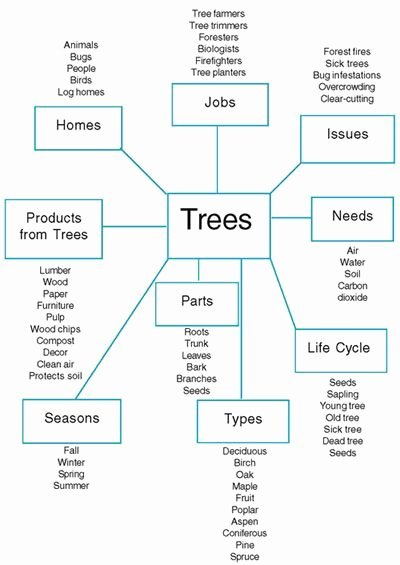 Pbl Lesson Plan Template Unique Figure 1 Planning Web Of the Tree Project Created by the