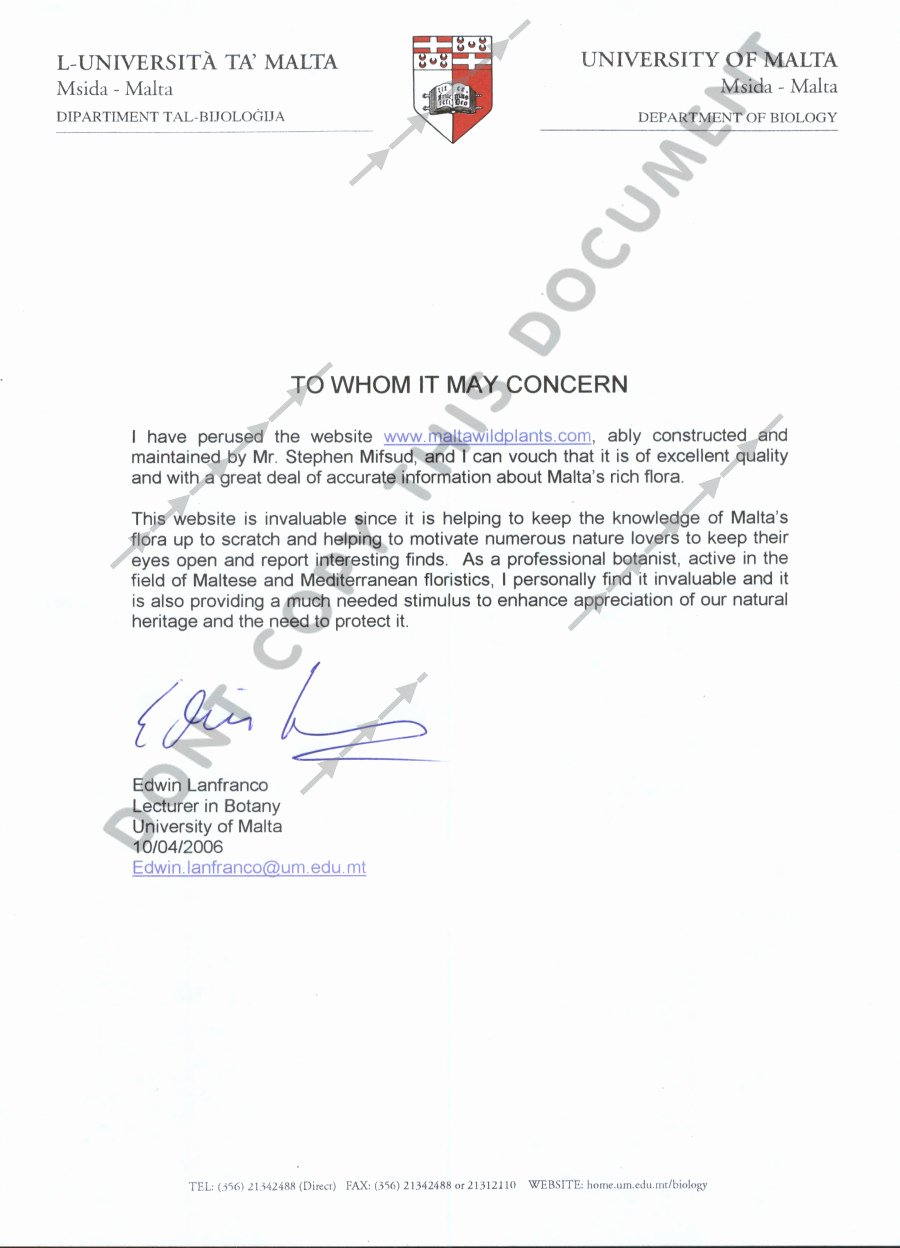 Recommendation Letter for Professor Promotion Elegant Writing A Reference Letter for A Graduate Student