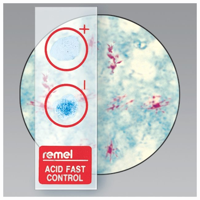 Remel Certificate Of Quality Elegant thermo Scientific Remel Qc Slide Afb Stain Control