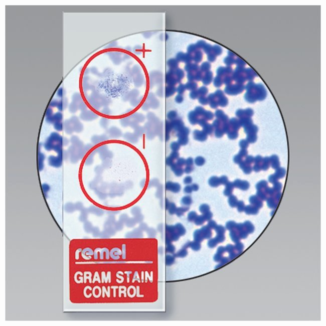 Remel Certificate Of Quality Fresh thermo Scientific™ Remel™ Qc Slide™ Gram Stain Control